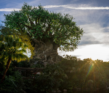 Animal Kingdom | Disney World | Touring Plans | Crowd Calendar ...
