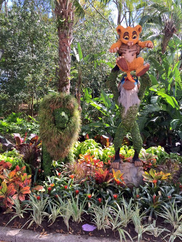 Lion King Topiary at Epcot International Flower and Garden Festival